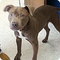 Adopt A Pet :: Jackson - Indianapolis, IN