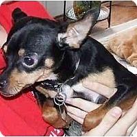 Adopt A Pet :: Charmin' Charley - Summerville, SC