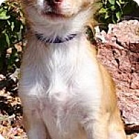 Adopt A Pet :: Squiggy - Gilbert, AZ
