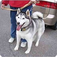 Adopt A Pet :: Sergei--Pending! - Belleville, MI