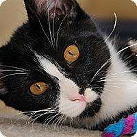 Adopt A Pet :: Tux - Monroe, GA