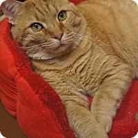 Adopt A Pet :: Eli - Duluth, GA