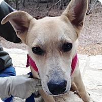 Adopt A Pet :: Paloma - Wimberley, TX