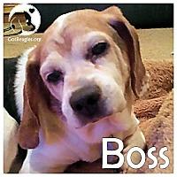 Adopt A Pet :: Boss - Pittsburgh, PA