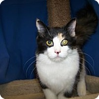 Adopt A Pet :: K-Apple1-Hallie - Colorado Springs, CO