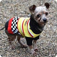 Adopt A Pet :: Flynn - Milwaukee, WI