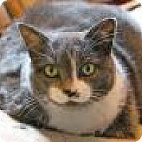 Adopt A Pet :: Jenny - Memphis, TN