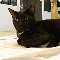 Adopt A Pet :: Eight Ball - Jupiter, FL