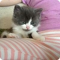 Adopt A Pet :: Amy - Sparta, NJ