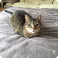 Adopt A Pet :: Abby - Toronto, ON