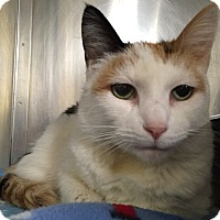 Adopt A Pet :: Camilla - Battle Creek, MI