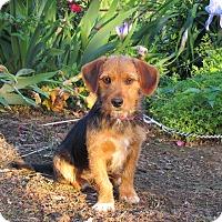 Adopt A Pet :: EMMA - Bedminster, NJ