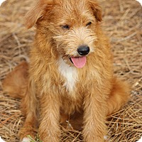 Adopt A Pet :: Ben-Pending Adoption - Pinehurst, NC