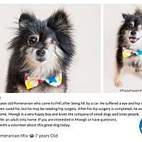 Adopt A Pet :: Mowgli - Pompano Beach, FL