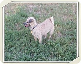 Terrier (Unknown Type, Small) Mix Dog for adoption in Roanoke, Virginia - Sampson