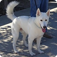 Adopt A Pet :: Ghost - Lathrop, CA