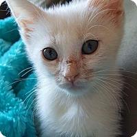 Adopt A Pet :: Obie - Florence, KY