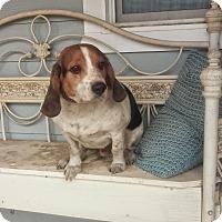 Adopt A Pet :: Waldo - El Cajon, CA