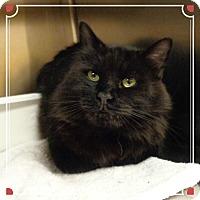 Adopt A Pet :: BEAR - Marietta, GA