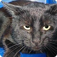 Adopt A Pet :: Lucky - Wildomar, CA