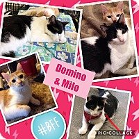 Adopt A Pet :: Milo - Keller, TX