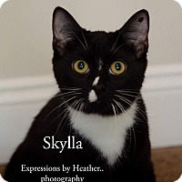 Adopt A Pet :: Skylla (Hera's babies) - Mount Laurel, NJ