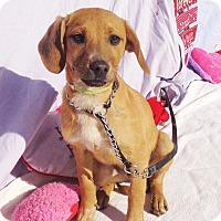 Adopt A Pet :: Juraz - West Chicago, IL