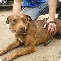 Adopt A Pet :: # 401-13 @ Animal Shelter - Zanesville, OH