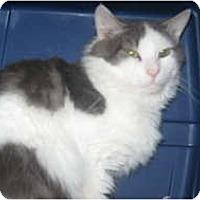 Adopt A Pet :: Frank - Clay, NY