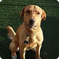 Adopt A Pet :: Bogey - Phoenix, AZ