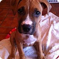 Adopt A Pet :: Sassy - Tallahassee, FL