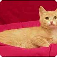 Adopt A Pet :: Khaki - Sacramento, CA