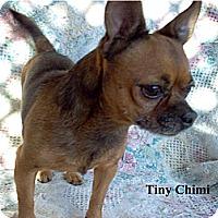 Adopt A Pet :: Chimi - Tucson, AZ