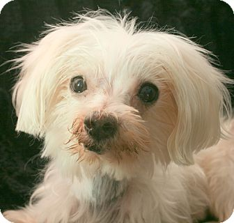 Covina Dogs For Adoption