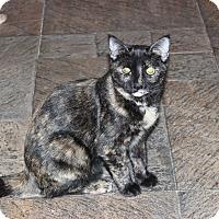 Adopt A Pet :: Skittles - Secaucus, NJ