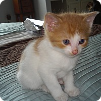 Adopt A Pet :: Silas - Fairborn, OH