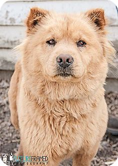 Gregory Sd Dog Rescue