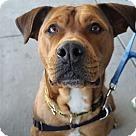 Adopt A Pet :: Yayi