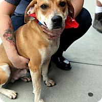 Adopt A Pet :: Homer - Richmond, VA