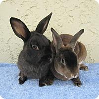 Adopt A Pet :: Kaboom & Sparkle - Bonita, CA