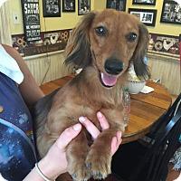 Adopt A Pet :: Annie - Cumberland, MD