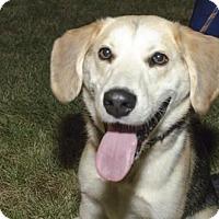 Adopt A Pet :: Andy  (Has application) - Washington, DC