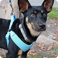 Adopt A Pet :: Zander - Richmond, VA