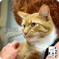 Adopt A Pet :: Alexander - Albuquerque, NM