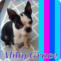 Adopt A Pet :: Abby Grace - various cities, FL