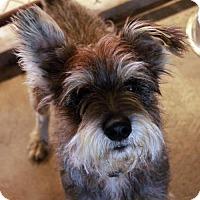 Adopt A Pet :: Garth - Waco, TX