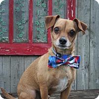 Adopt A Pet :: Lucky - Sioux Falls, SD
