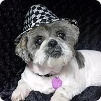 Adopt A Pet :: Pancake Clark - Urbana, OH