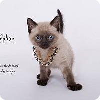 Adopt A Pet :: Stephan - Riverside, CA