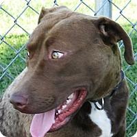 Adopt A Pet :: Joe - Germantown, MD